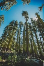 talltrees
