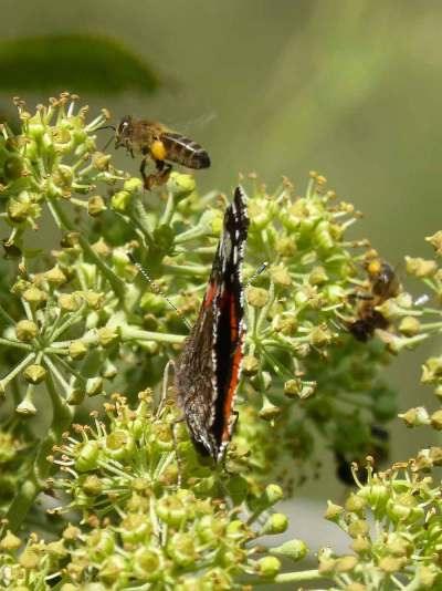 abelha-borboleta-flor-red