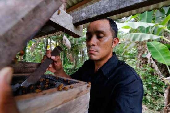 meliponicultura-Pará