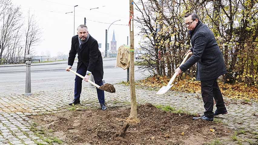 Der Kaufmännische Geschäftsführer der BTB David Weiblein (links) pflanzt zusammen mit dem Bezirksbürgermeister von Treptow-Köpenick Oliver Igel (rechts) zum 30 jährigen Jubiläum eine Esche am Köllnischen Platz in Köpenick.