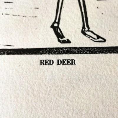 Titre red deer