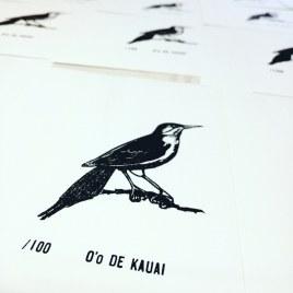 O'o de Kauai