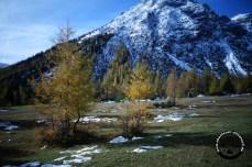 Berge und Lärchen