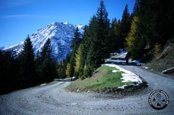 Forstweg zum Lichtsee