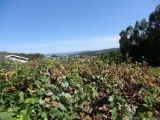 Camino-Portugues-Portugal-2012-085