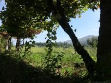 Camino-Portugues-Portugal-2012-145
