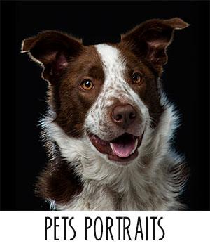 Pets_Portraits