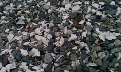 Cama Beach is not a sandy beach, but one of rocks and shells.