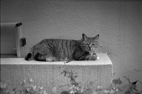 NOKTON 50mm f1.1 Kodak 100TMX
