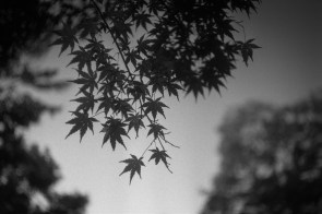 Leica MP Hektor 5cm f2.5  ILFORD FP4