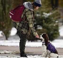 owner giving dog treat outside