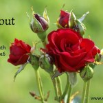 All About Rose: The Herb of the Month for February 2016