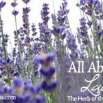 All About Lavender: The Herb of the Month for April 2016