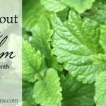 All About Lemon Balm: The Herb of the Month for May 2016