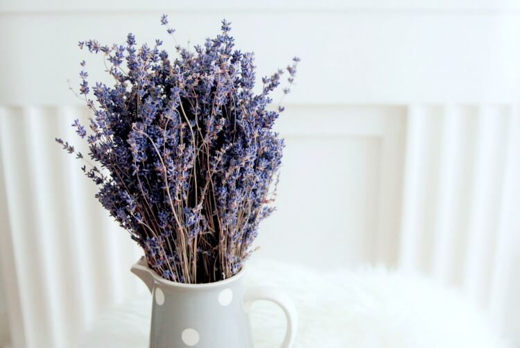 lavender essential oil is the most important EO to have