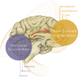 higher brain living