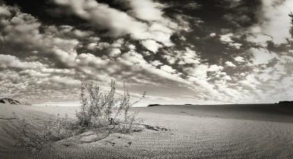 Oleshki Desert panorama