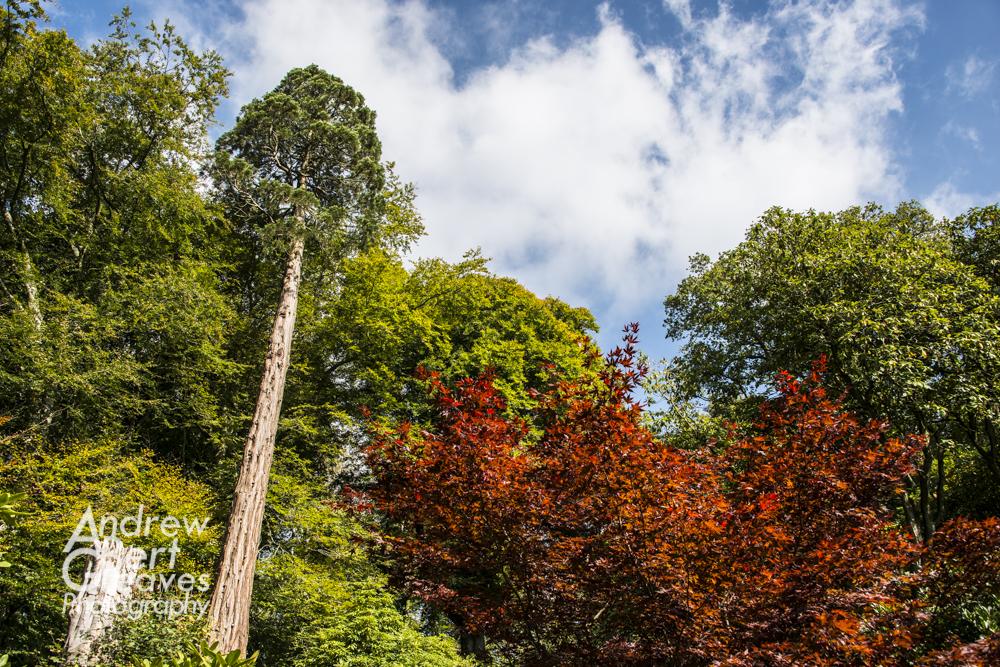 looking up at trees at Stourhead