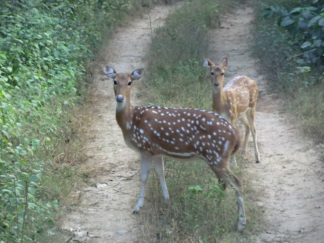 This curious couple refused to vacate the trail!