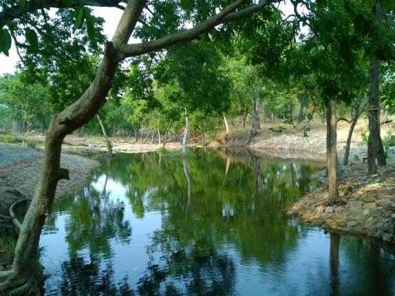 A stream in Bandhavgarh