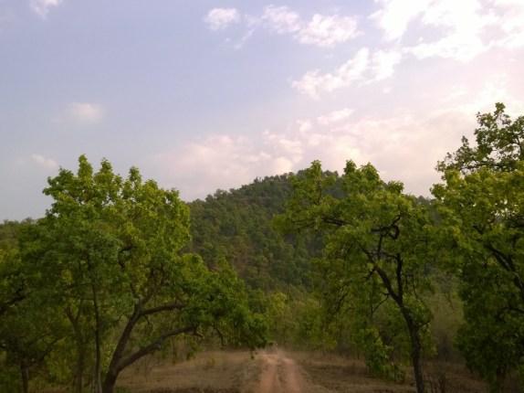 Undulating tiger trails in Tala
