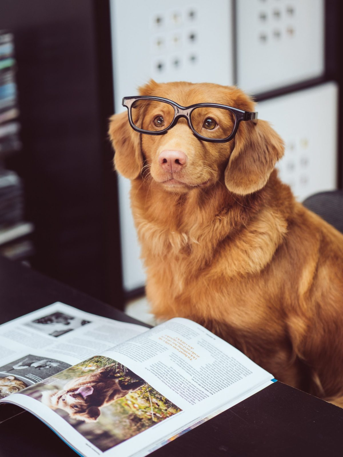 Dog Reading a book about Dogs