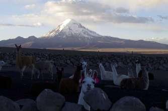 Le troupeau rentré pour la nuit