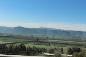 Agriculture in Israel1