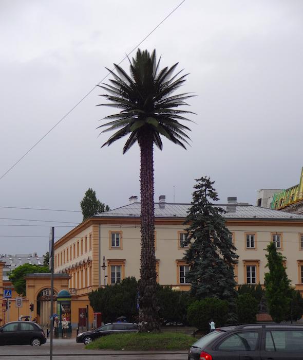 Palm tree, Warsaw, Poland