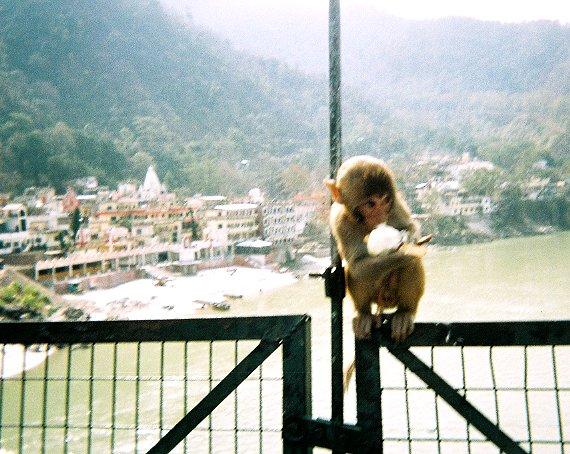 monkeyeatingicecream.jpg