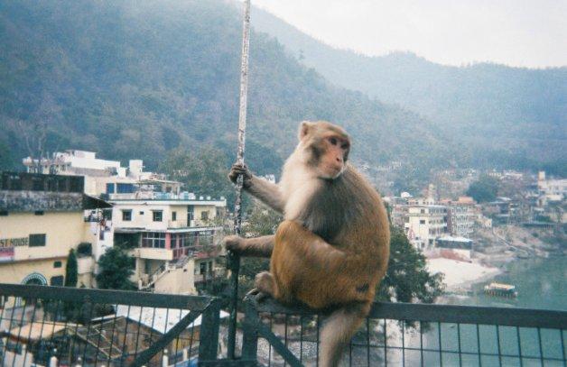 monkeyonbridge.jpg