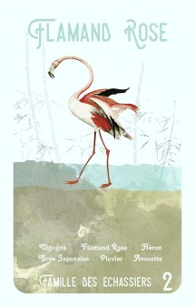 2-flamand-rose