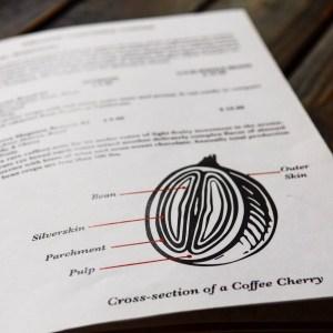 Anatomy of a coffee cherry