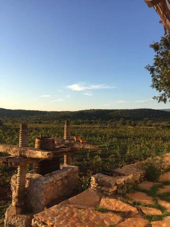 stari grad vineyard hora agriculture vines medsailors sailing holiday trip blog review tips and tricks
