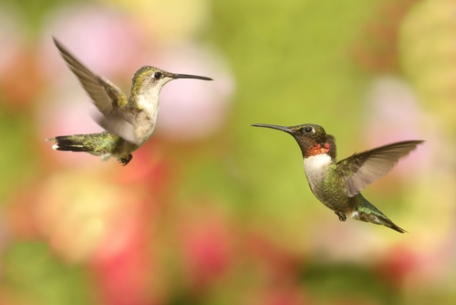 Home Gardening Pest And Disease Control How To Keep Ants Out Of The Humming Bird Feeder