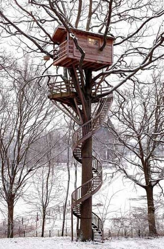 President Studies Wings In The Sky   Spiral Staircase Around Tree Trunk   Stair Case   Nelson Treehouse   Staircase Design   Robert Mcintyre   Canopystair