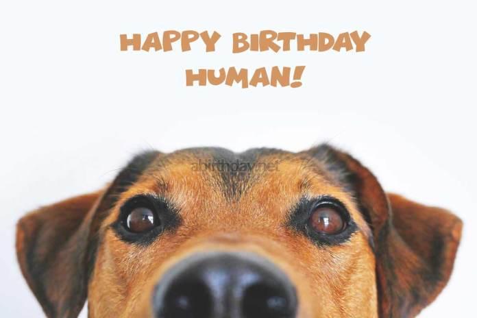 Funny Dog Birthday Meme