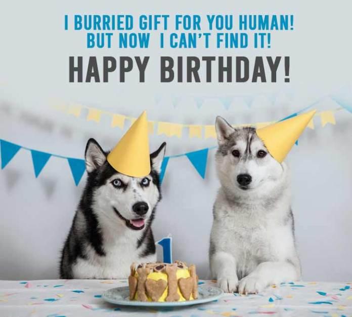 Husky Birthday Meme