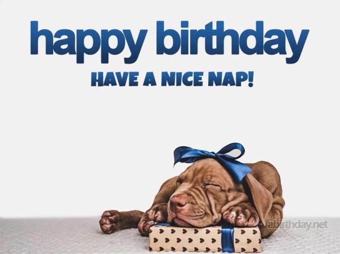 Sleepy Dog Birthday Meme