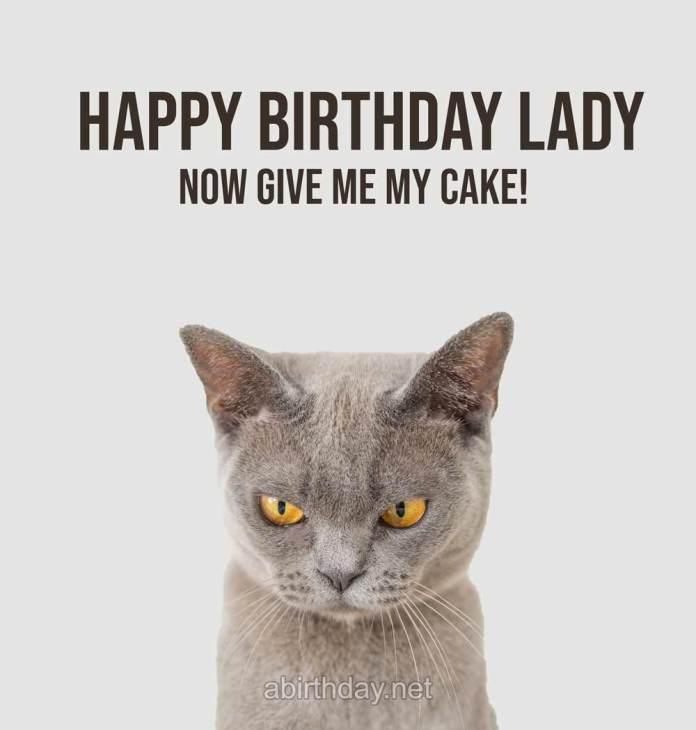 Happy Birthday Lady Cat Birthday Meme