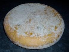 16 weken oude Gewone kaas