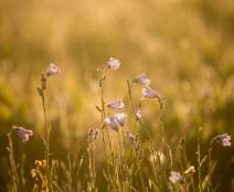 Wildblümchen