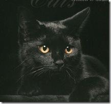 и чёрный кошак янь.1