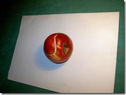 Гнилые яблоки. Культуры.) 003