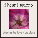 Projektbutton zur Blogaktion i heart macro von shinethedivinecreativityisaspiritualpractice