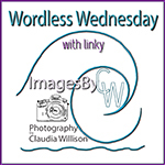Projektbutteon Wordless Wednesday by claudia wilson