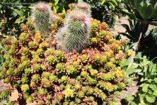 Cactus in a garden at Scopello in Sicily
