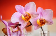 flowers by ABL Photography-3391
