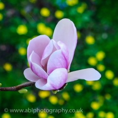 flowers by ABL Photography-3407