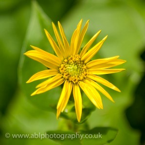 flowers by ABL Photography-